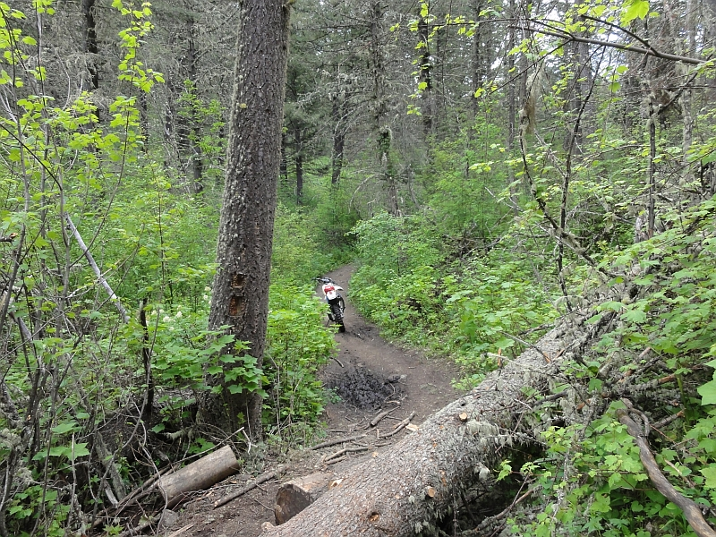 Bridger Mountain Trails